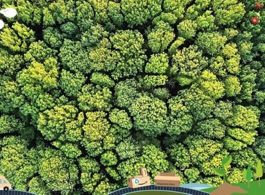 Grüne Woche bei Amazon