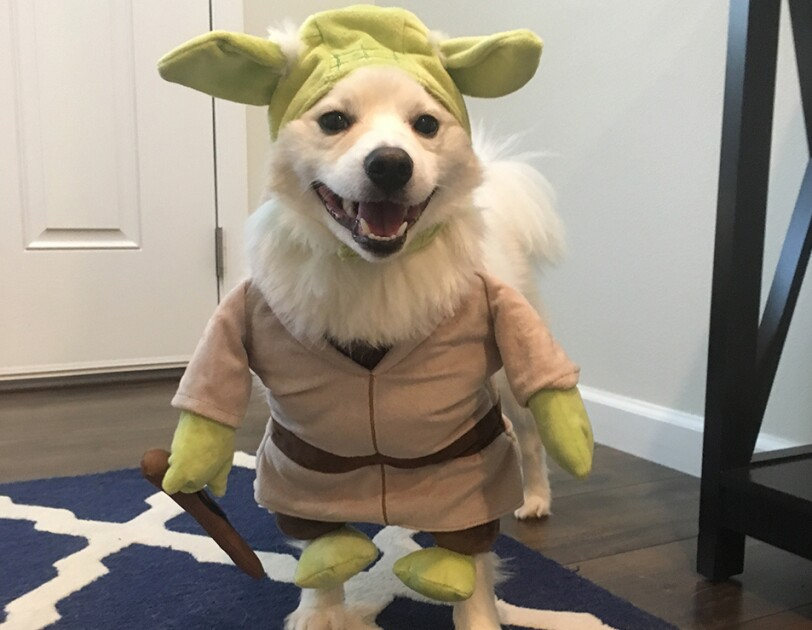 Dog wearing a Yoda costume