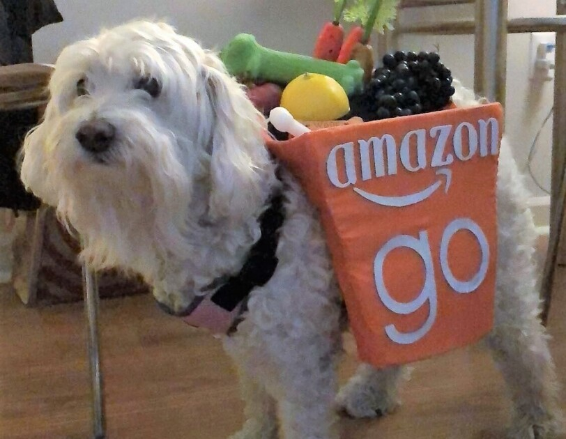 Dog wearing an Amazon Go shopping bag costume. Costume has fake lemon, carrots, and other groceries sticking out of the top.