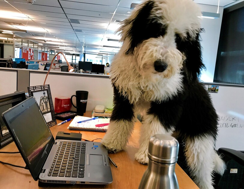 Dogs of Amazon - Black and white dog on desk