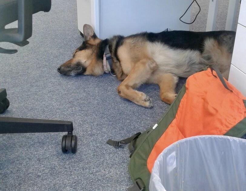 Ein Hund unter einem Schreibtisch