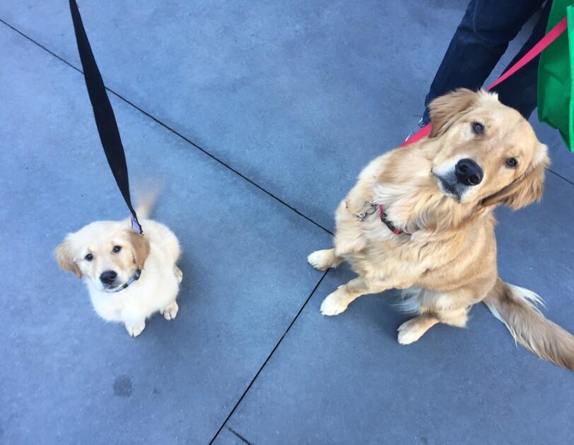 Dogs of Amazon - Marshall on leash