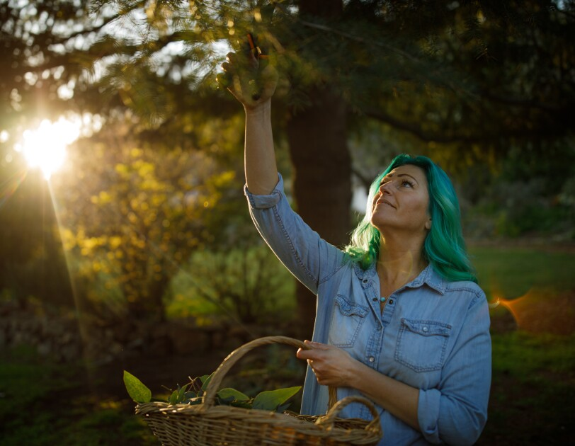 A woman wearing denim reaches up to harvest leaves from a tree.