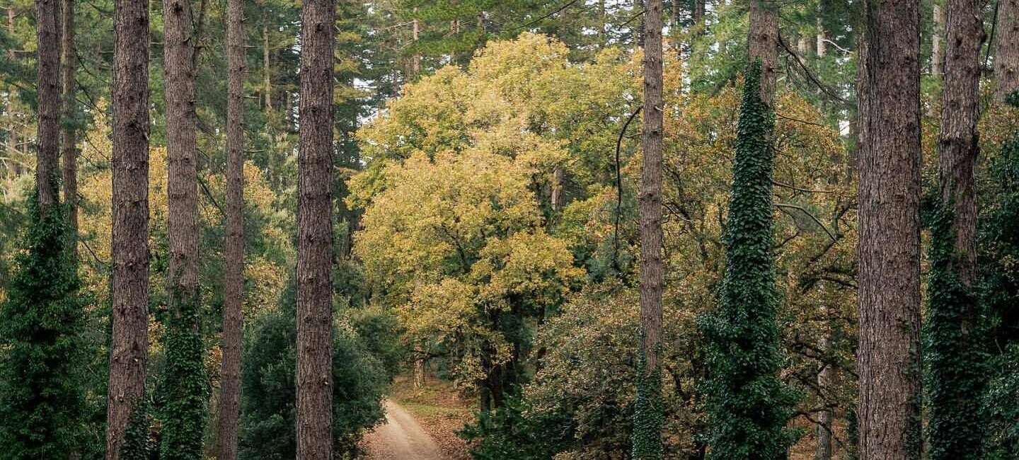 A dirt path winds through a forested area.