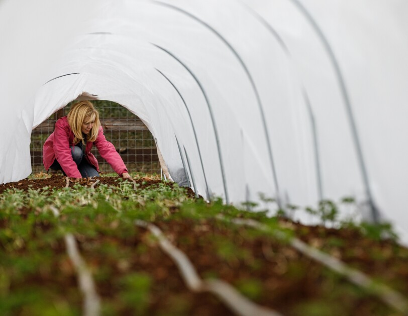 Soil and sprouts under a plastic tented structure. In the background, a woman in jeans and a pink coat tends to the plants.