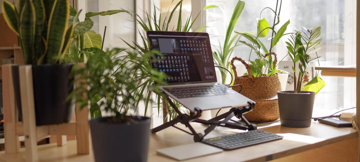 A laptop among green plants