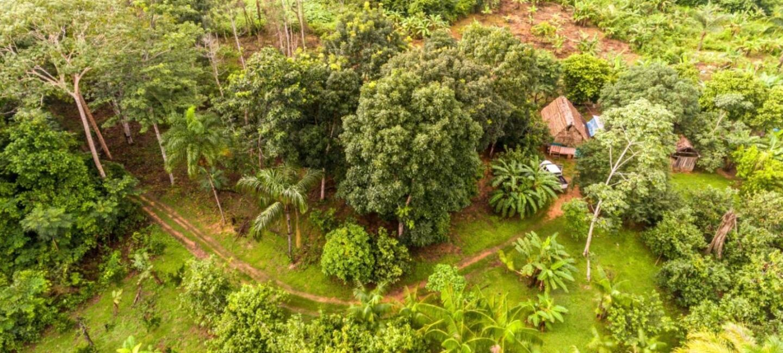 Ein Wald und eine grüne Wiesen sind von oben fotografiert.
