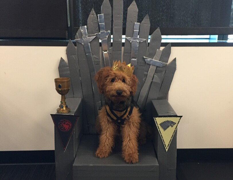 A dog, dressed as a prince, sits upon a (Game of Thrones) throne made of Amazon boxes.
