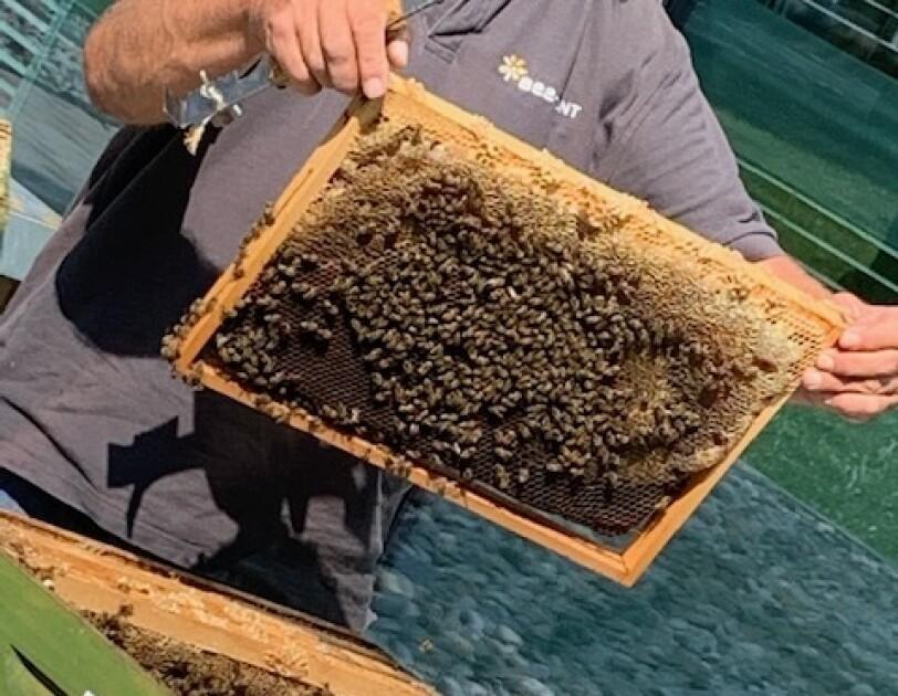 Ein Mann öffnet den Deckel eines Bienenstocks. Viele Bienen sind in dem Bienenstock und am Deckel.