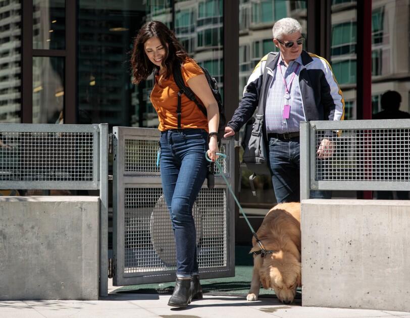 A woman leads a dog through a metal gate. A man follows.