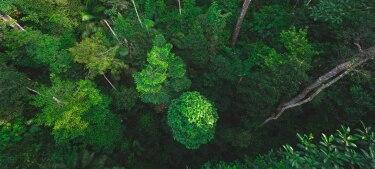Wälder von oben