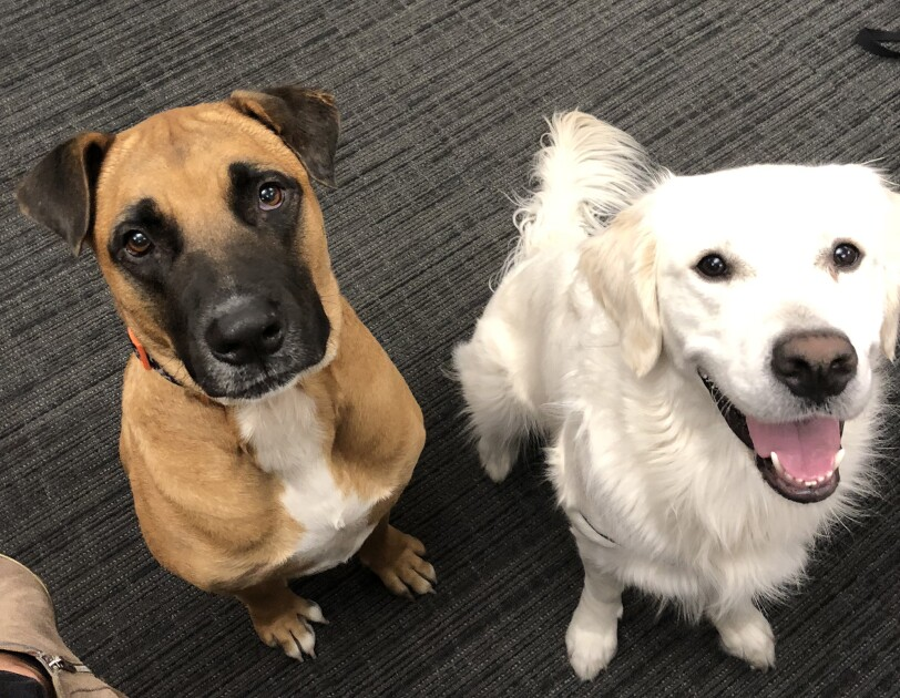Dogs of Amazon - two dogs looking up