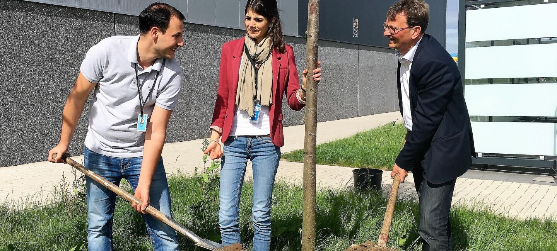 2 Männer und eine Frau beim Pflanzen eines Baumes