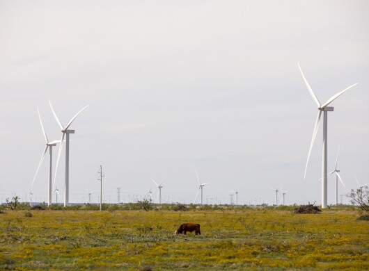 A collection of wind turbines in one of  Amazon's wind farms