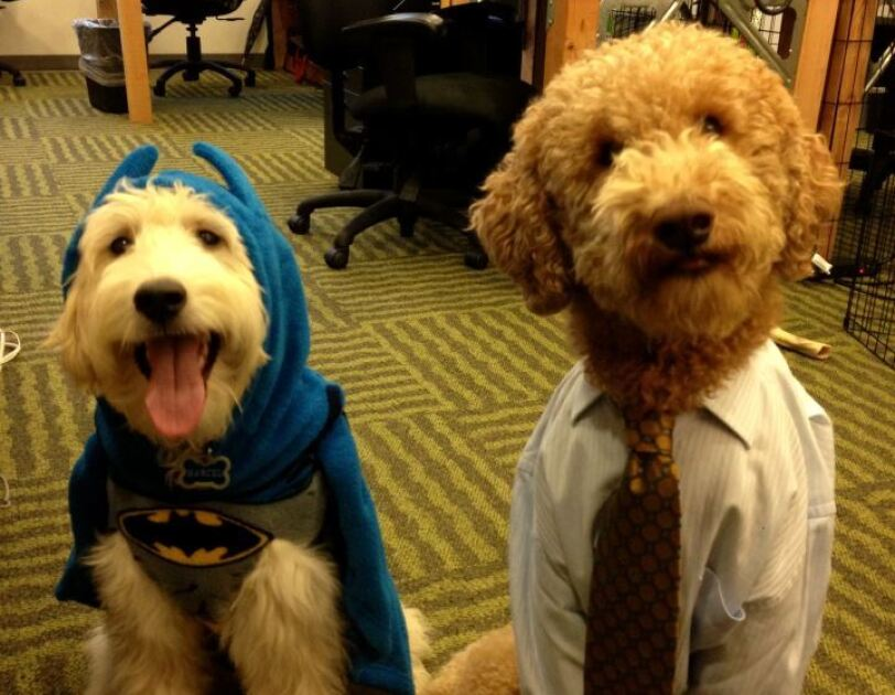 Two dogs at Amazon offices, dressed as Batman and a business man.