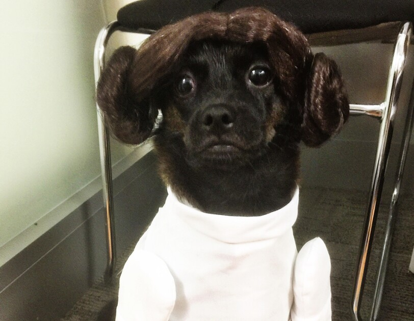 Dog dressed as Princess Leia from Star Wars