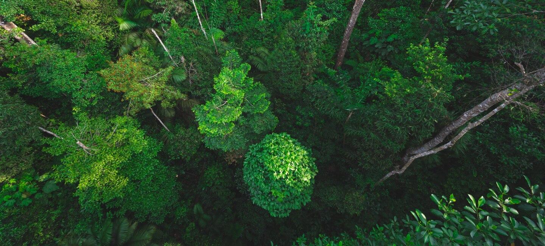 Regenwald von oben