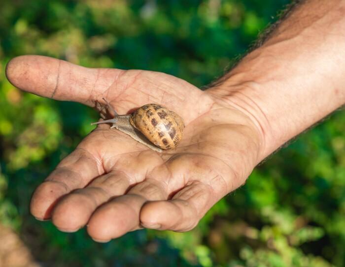 Una lumaca di Nuvò Cosmetic sulla mano di Andrea Gaspari