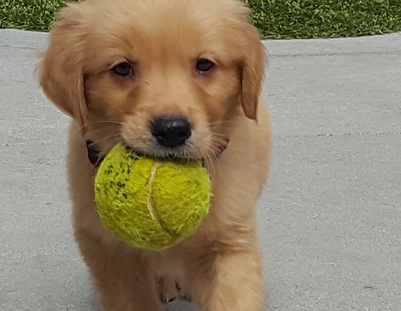 Dogs of Amazon - puppy with ball