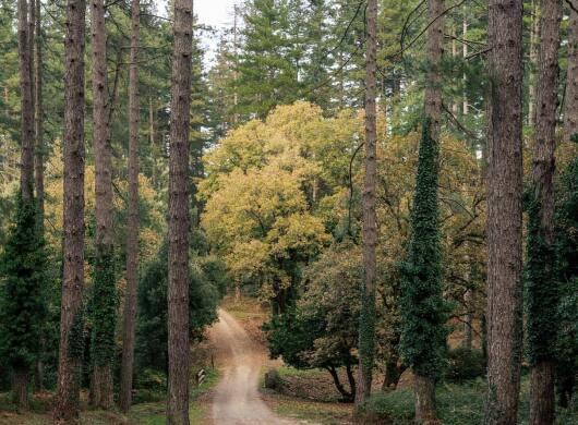 Parco Italia announcement. Foto de Fabio Salbitano. La foto es un bosque de pino y robles muy altos con un sendero en el medio. Además se puede ver un pequeño puente de madera en la mitad de la foto. Parece otoño por el color de las hojas verdes y amarillas. El cielo está un poco gris.
